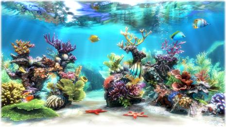 SereneScreen Marine Aquarium s2.jpg